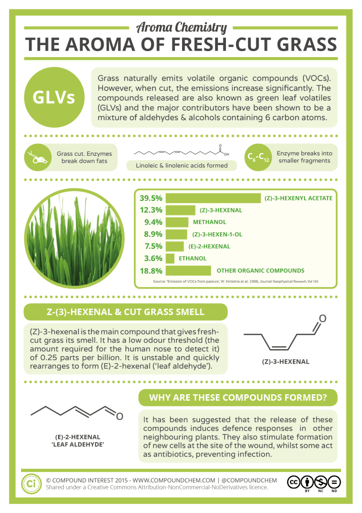 Aroma-Chemistry-The-Smell-of-Fresh-Cut-Grass-724x1024